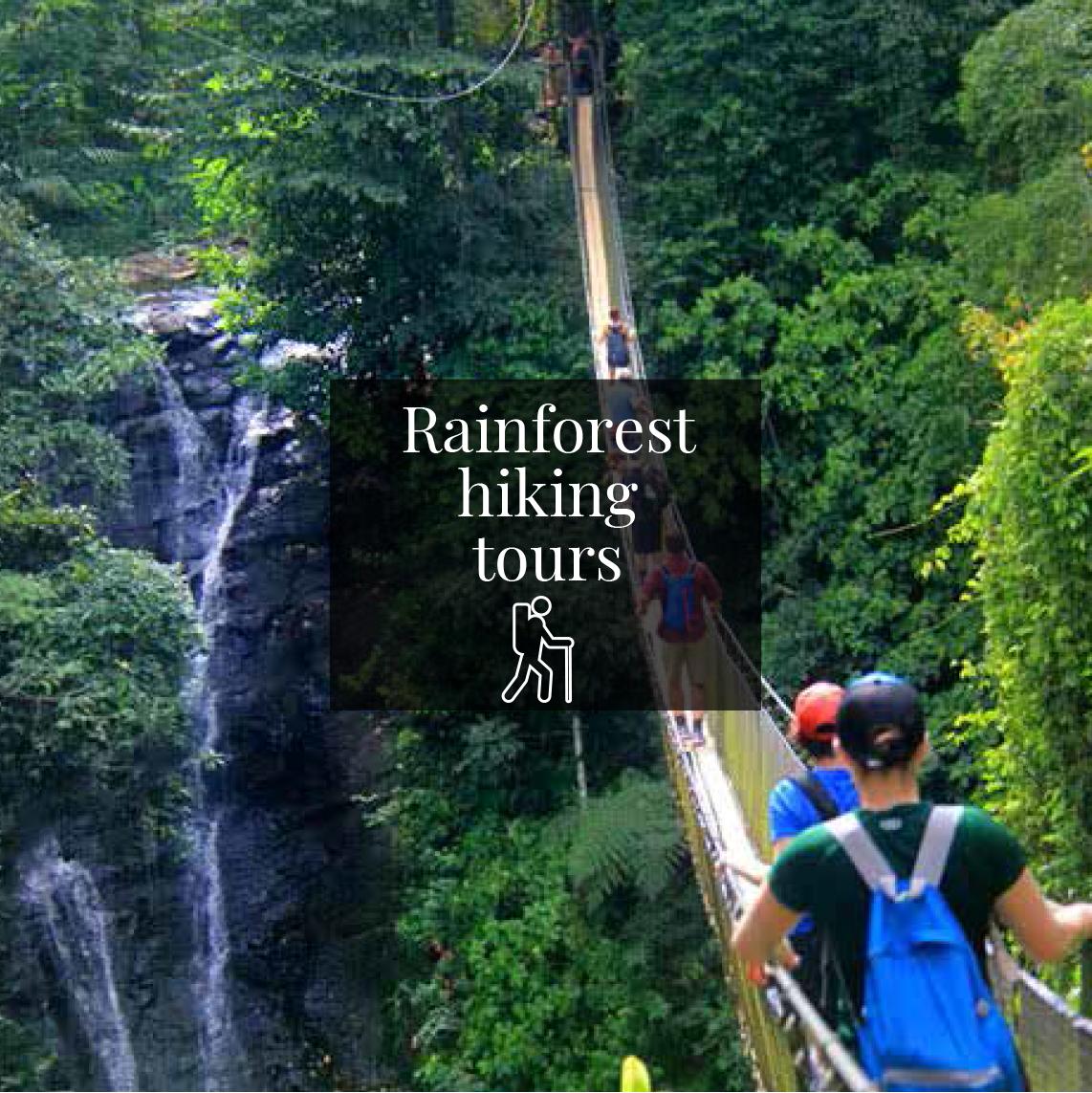 Rainforest hiking tours